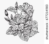 bouquet of flowers. floral... | Shutterstock .eps vector #677214583