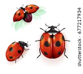 Ladybird Illustration. Set Of...