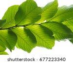 green leaves on white background   Shutterstock . vector #677223340
