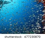 glass fishes                    ...   Shutterstock . vector #677230870