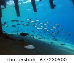 fishes under the bridge         ...   Shutterstock . vector #677230900