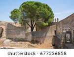 ruin with a large tree growing... | Shutterstock . vector #677236858