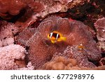 egypt   red sea diving   coral... | Shutterstock . vector #677298976