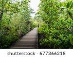wood walkway in the mangrove... | Shutterstock . vector #677366218