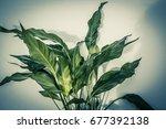 exotic plants background | Shutterstock . vector #677392138