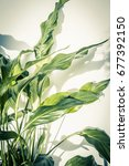 exotic plants background | Shutterstock . vector #677392150