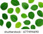 green leaves on white background | Shutterstock . vector #677494690