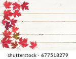 colorful red  fall maple leaves ... | Shutterstock . vector #677518279