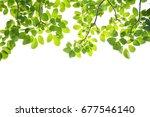 green leaves on a white... | Shutterstock . vector #677546140