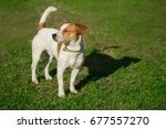 jack russell terrier enjoying... | Shutterstock . vector #677557270