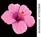 hibiscus flower | Shutterstock .eps vector #677622868