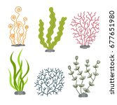 sea plants and aquatic marine... | Shutterstock .eps vector #677651980
