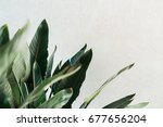 tropical  leaves  jungle leaf   ... | Shutterstock . vector #677656204