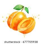watercolor illustration of... | Shutterstock . vector #677705938