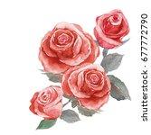 brunch of rose   watercolor... | Shutterstock . vector #677772790