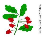 schisandra berries branch...   Shutterstock .eps vector #677877856