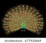 beautiful peacock spreading its ... | Shutterstock .eps vector #677920669