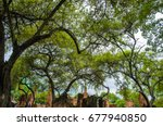 nature in the old city | Shutterstock . vector #677940850