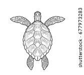 sea turtle adult coloring page | Shutterstock . vector #677973283