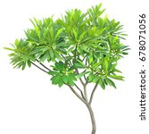 green fresh leaf isolated white ...   Shutterstock . vector #678071056