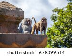 a family of baboons perched on... | Shutterstock . vector #678099514