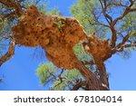 huge nest of the the sociable... | Shutterstock . vector #678104014