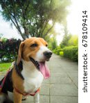 Stock photo walking with beagle dog in the summer park 678109414