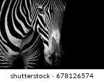 Mono Closeup Grevy Zebra Dark - Fine Art prints