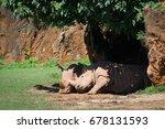 white rhinoceros nuzzling... | Shutterstock . vector #678131593