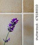purple lavender flowers | Shutterstock . vector #678180010