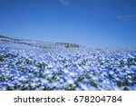 sea of flowers at japan  tokyo  | Shutterstock . vector #678204784