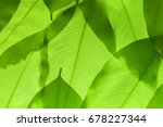 green leaves texture background ... | Shutterstock . vector #678227344