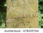 segment of palm tree closeup | Shutterstock . vector #678245764