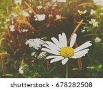 wild flowers growing in a field | Shutterstock . vector #678282508