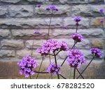 purple flowers growing against... | Shutterstock . vector #678282520