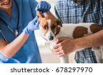 cute dog is being examined by... | Shutterstock . vector #678297970