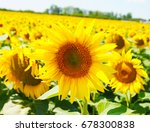 sunflower field | Shutterstock . vector #678300838
