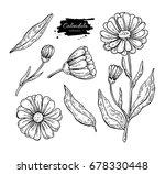 calendula vector drawing....   Shutterstock .eps vector #678330448