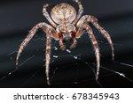 Spider. Macro Photo Of Garden...