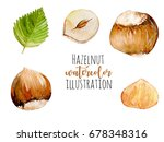 set of watercolor hazelnuts... | Shutterstock . vector #678348316