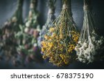 hanging bunches of medicinal... | Shutterstock . vector #678375190