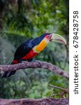 red breasted toucan | Shutterstock . vector #678428758