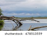Lake With A Fallen Tree Snag...