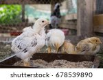 chicken on the farm. slovakia | Shutterstock . vector #678539890