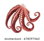 beautiful of a squid tentacles... | Shutterstock . vector #678597463