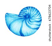 illustrations of blue nautilus... | Shutterstock . vector #678623704