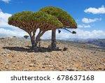 yemen  07 02 2013  the dragon... | Shutterstock . vector #678637168