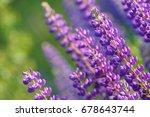 lupinus  lupin  lupine field... | Shutterstock . vector #678643744