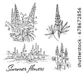 hand drawn lupine flowers set.... | Shutterstock .eps vector #678672856
