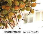 areca nut at garden | Shutterstock . vector #678674224